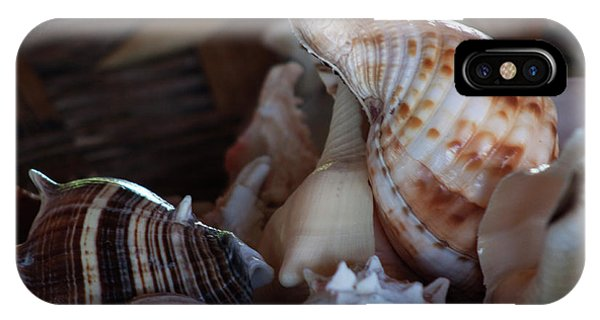 Seashells  IPhone Case