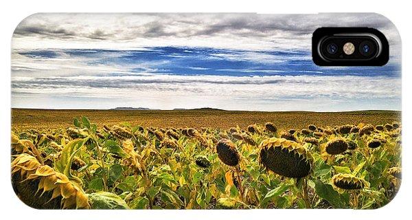Seasons In The Sun IPhone Case