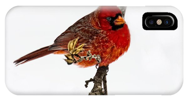 Second Cardinal IPhone Case
