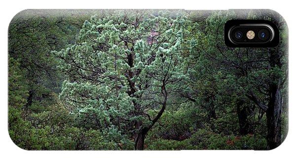 Sedona Tree #1 IPhone Case
