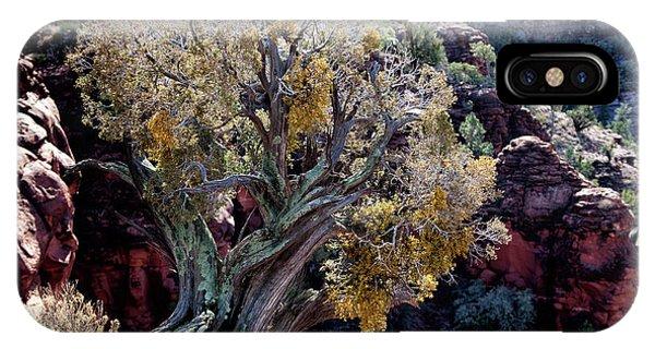 Sedona Tree #2 IPhone Case