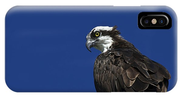 Ospreys iPhone Case - See No Evil by Evelina Kremsdorf