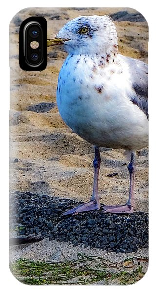 IPhone Case featuring the photograph See The Gull by Kendall McKernon