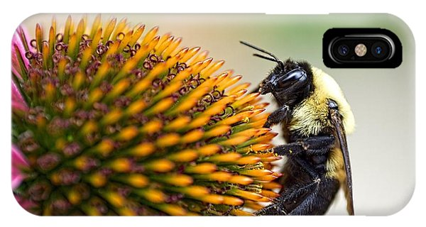 Seeking Nectar IPhone Case
