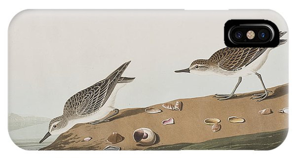 Semipalmated Sandpiper IPhone Case