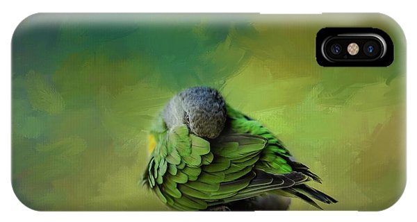 Senegal Parrot IPhone Case