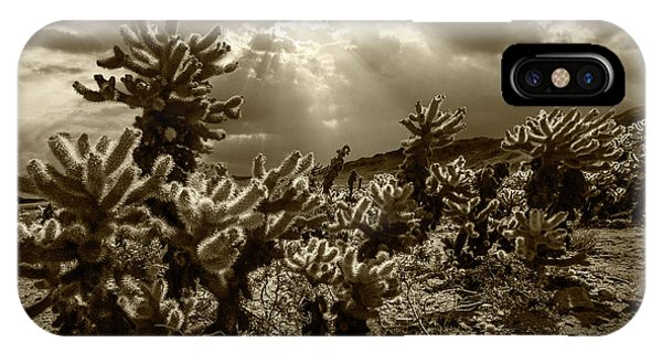 Teddy Bear Cholla iPhone Case - Sepia Tone Of Cholla Cactus Garden Bathed In Sunlight by Randall Nyhof