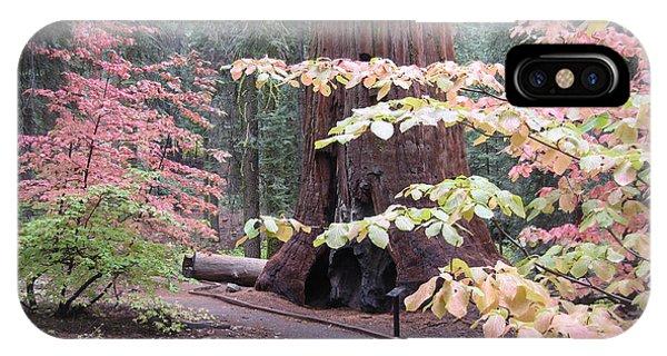 Sierra Nevada iPhone Case - Sequoia  Trees 3 by Naxart Studio