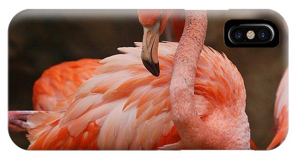 Serious Flamingo Phone Case by Teresa Blanton