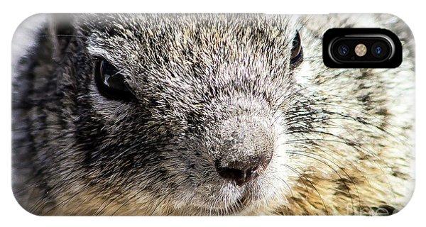 Serious Squirrel IPhone Case