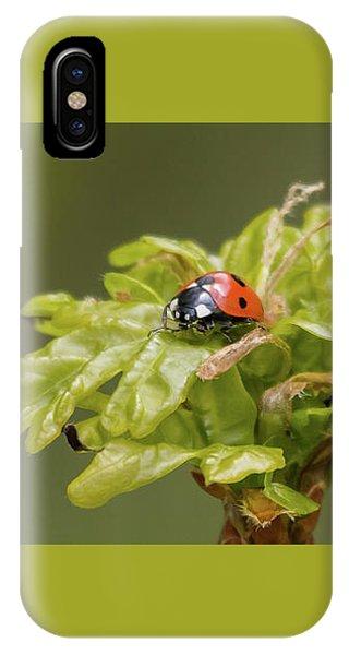 Seven Spots In A Crown Of Oak IPhone Case