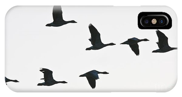 Sevenfold Geese IPhone Case