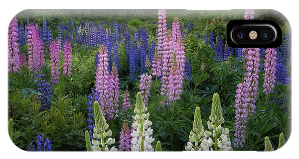Shades Of Lupines IPhone Case