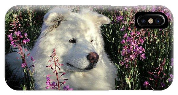 Prairie Dog iPhone Case - Shadows by Fiona Kennard