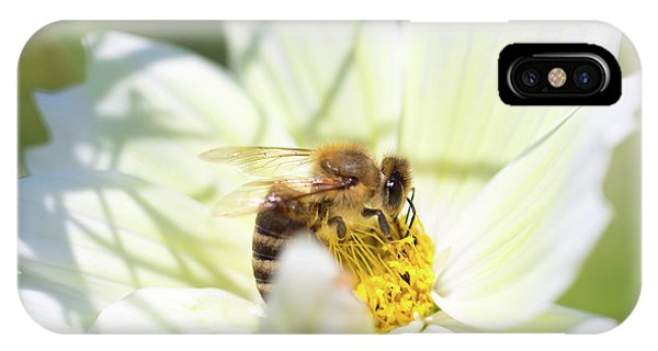 IPhone Case featuring the photograph Shadowy Bee by Brian Hale