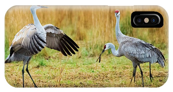 Sandhill Crane iPhone Case - Shall We Dance by Mike Dawson