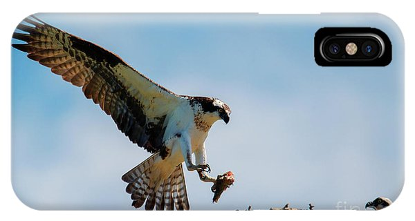 Ospreys iPhone Case - Sharing Lunch by Mike Dawson