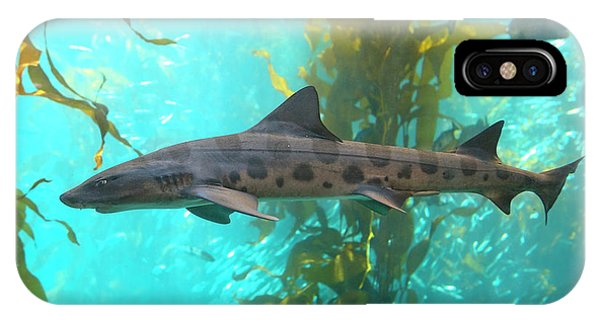 Monterey Bay Aquarium iPhone Case - Shark by Brian Knott Photography