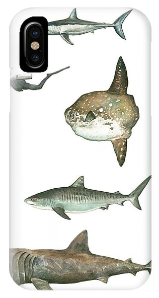 Scuba Diving iPhone Case - Sharks And Mola Mola by Juan Bosco