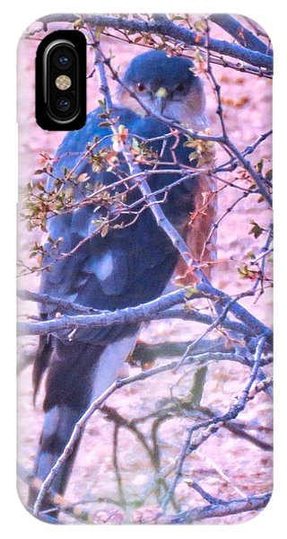 Sharp-shinned Hawk Hunting In The Desert 2 IPhone Case