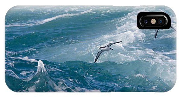 Shearwaters IPhone Case