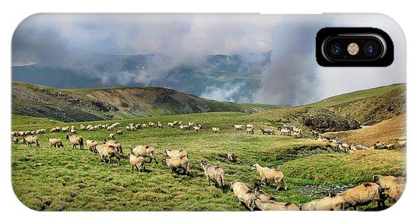 Sheep In Carphatian Mountains IPhone Case