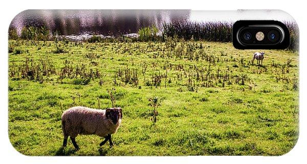 Sheep In Eniskillen IPhone Case