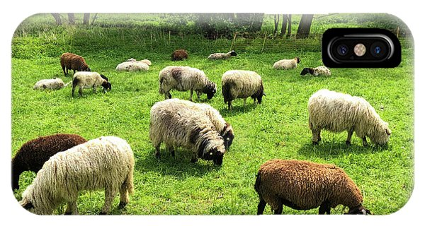 Germany iPhone Case - Sheep On Meadow by Matthias Hauser