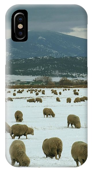 Sheep On Winter Field IPhone Case