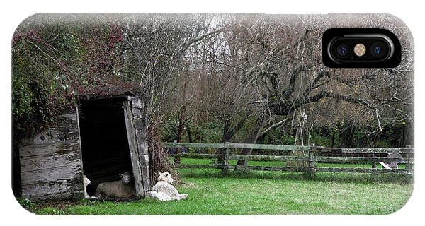 Sheep Shed IPhone Case