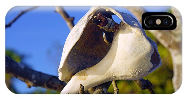 Shell On Brach Of Mangrove Tree At Barefoot Beach In Napes, Fl IPhone Case