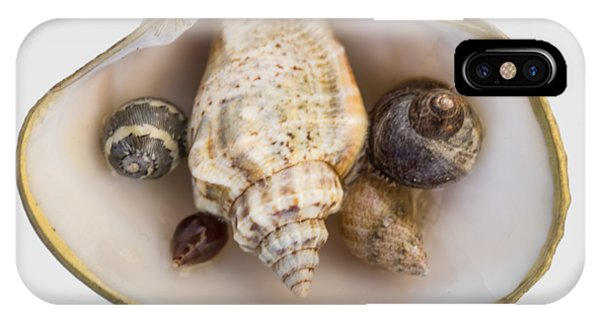 Shells Within A Sea Shell IPhone Case