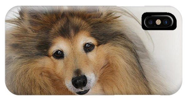 Sheltie Dog - A Sweet-natured Smart Pet IPhone Case