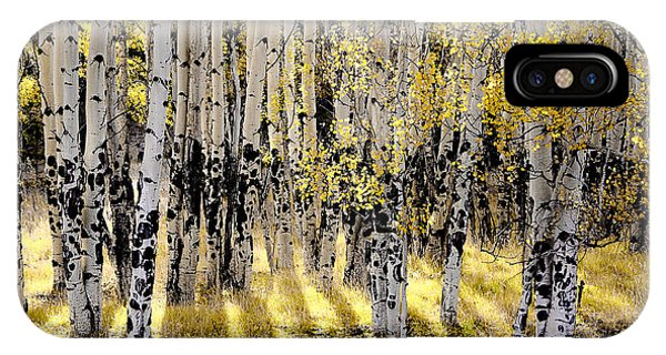 Shining Aspen Forest IPhone Case