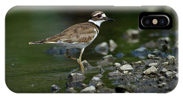 Killdeer iPhone Case - Killdeer  by Douglas Stucky