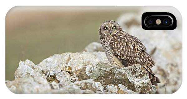Short-eared Owl In Cotswolds IPhone Case