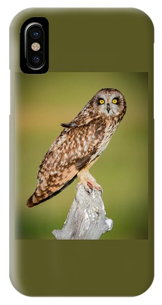 Short Eared Owl IPhone Case
