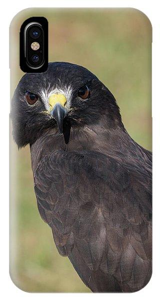 Short-tailed Hawk Portrait - Winged Ambassadors IPhone Case