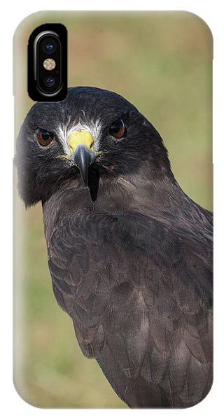 Short-tailed Hawk Portrait - Winged Ambassadors IPhone Case