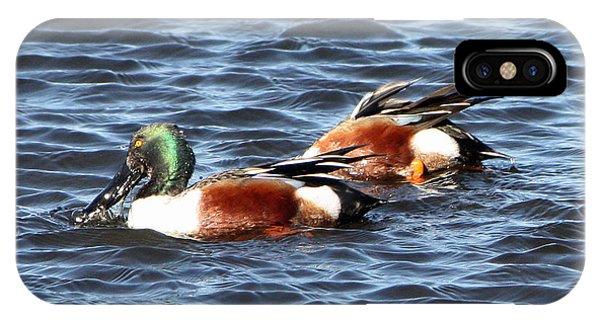 Shoveler Duck 1 IPhone Case