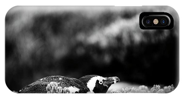 IPhone Case featuring the photograph Shy African Penguin Black And White by Tim Hester