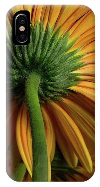 Shy Daisies IPhone Case