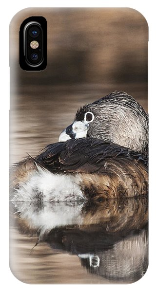 Shy Grebe IPhone Case