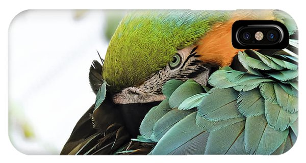 Shy Macaw IPhone Case