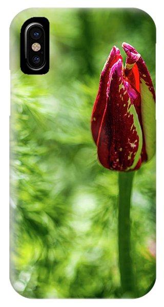 Shy Tulip IPhone Case