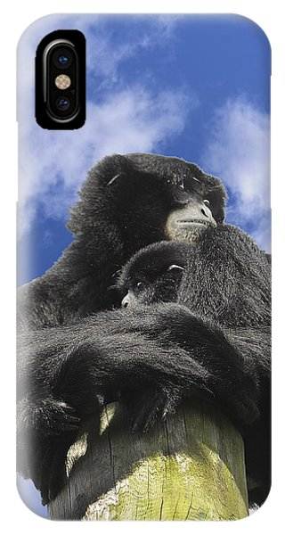 Siamang Gibbon Phone Case by Keith Lovejoy