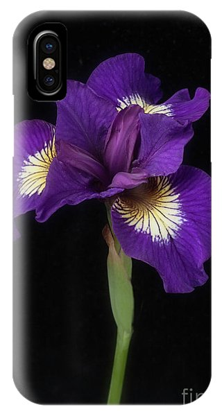 Siberian Iris IPhone Case
