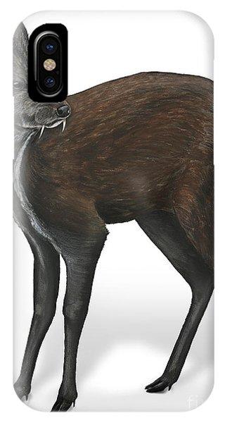 Siberian Musk Deer Moschus Moschiferus - Chevrotain Porte-musc - Ciervo Almizclero - Moschustier IPhone Case