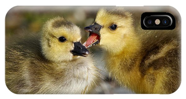 Sibling Love - Baby Canada Geese IPhone Case