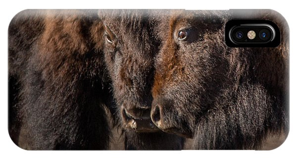 Yellowstone National Park iPhone Case - Siblings // Lamar Valley, Yellowstone National Park by Nicholas Parker